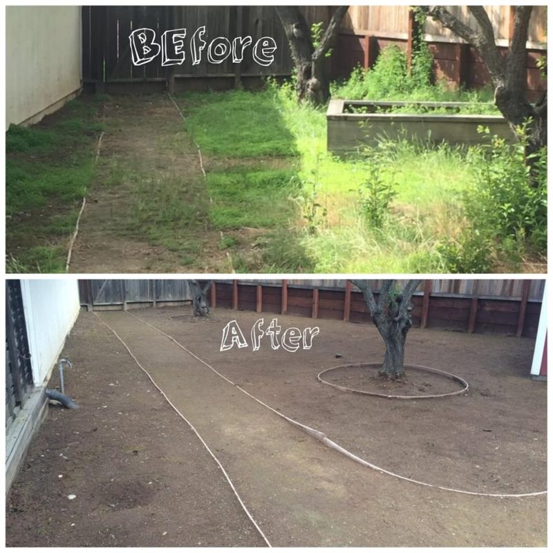 Yard Clean Up Before and After 2